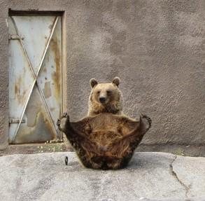 1-Female-Brown-bear-doing-001